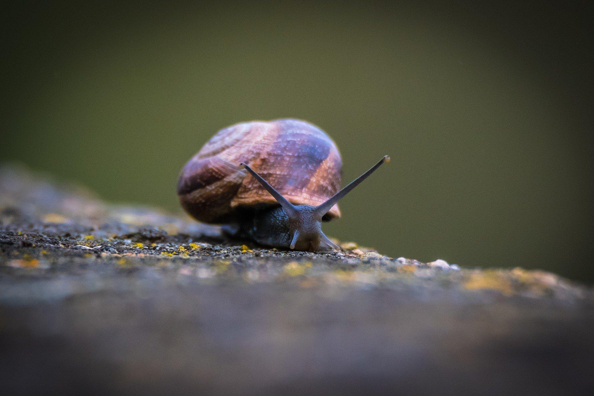 slow-as-a-snail